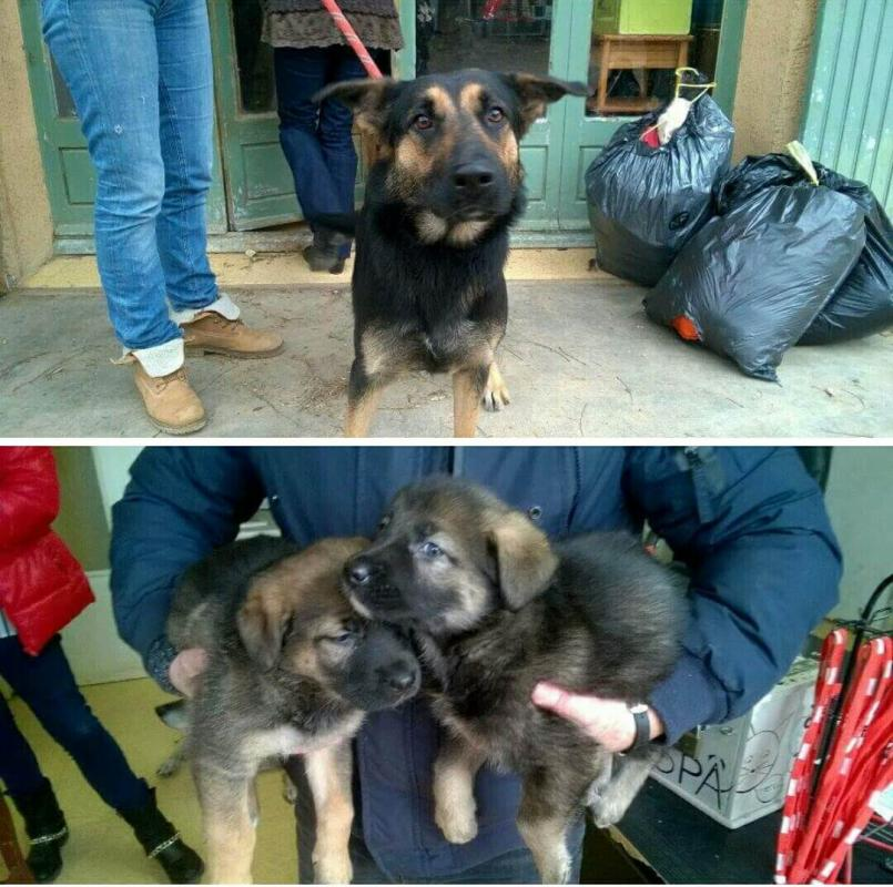 chienne trouvée à Eyguières