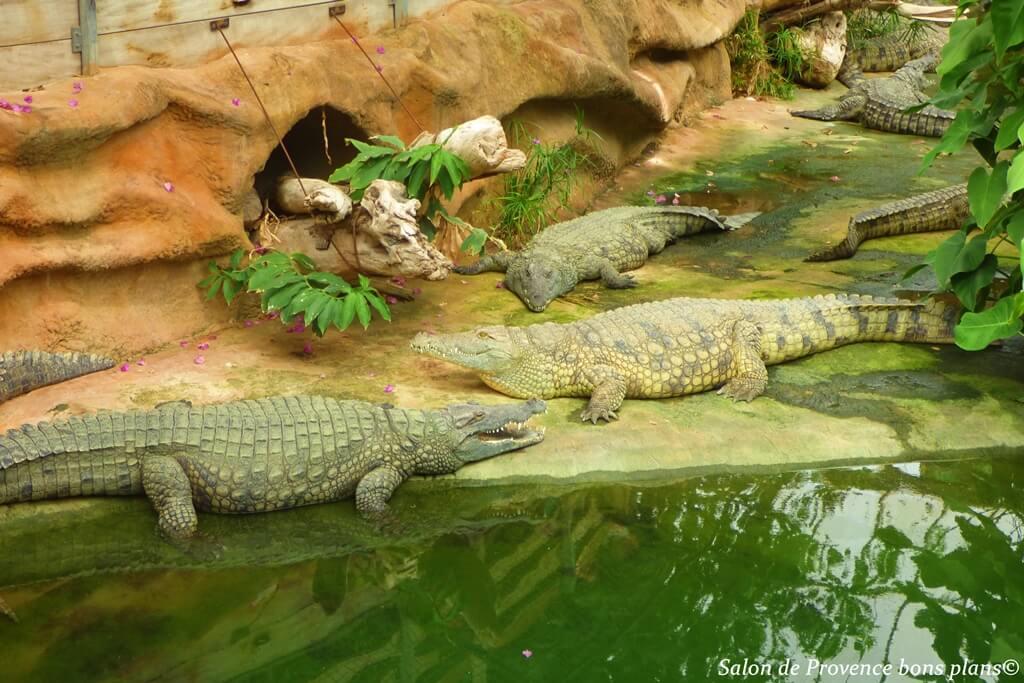 La ferme aux crocodiles 1