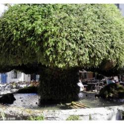 fontaine-moussue-salon-de-provence (2)
