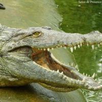 La ferme aux crocodiles 3